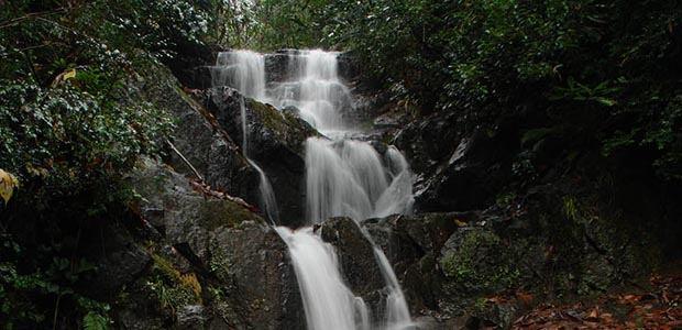 Kintrishi Nature Reserve